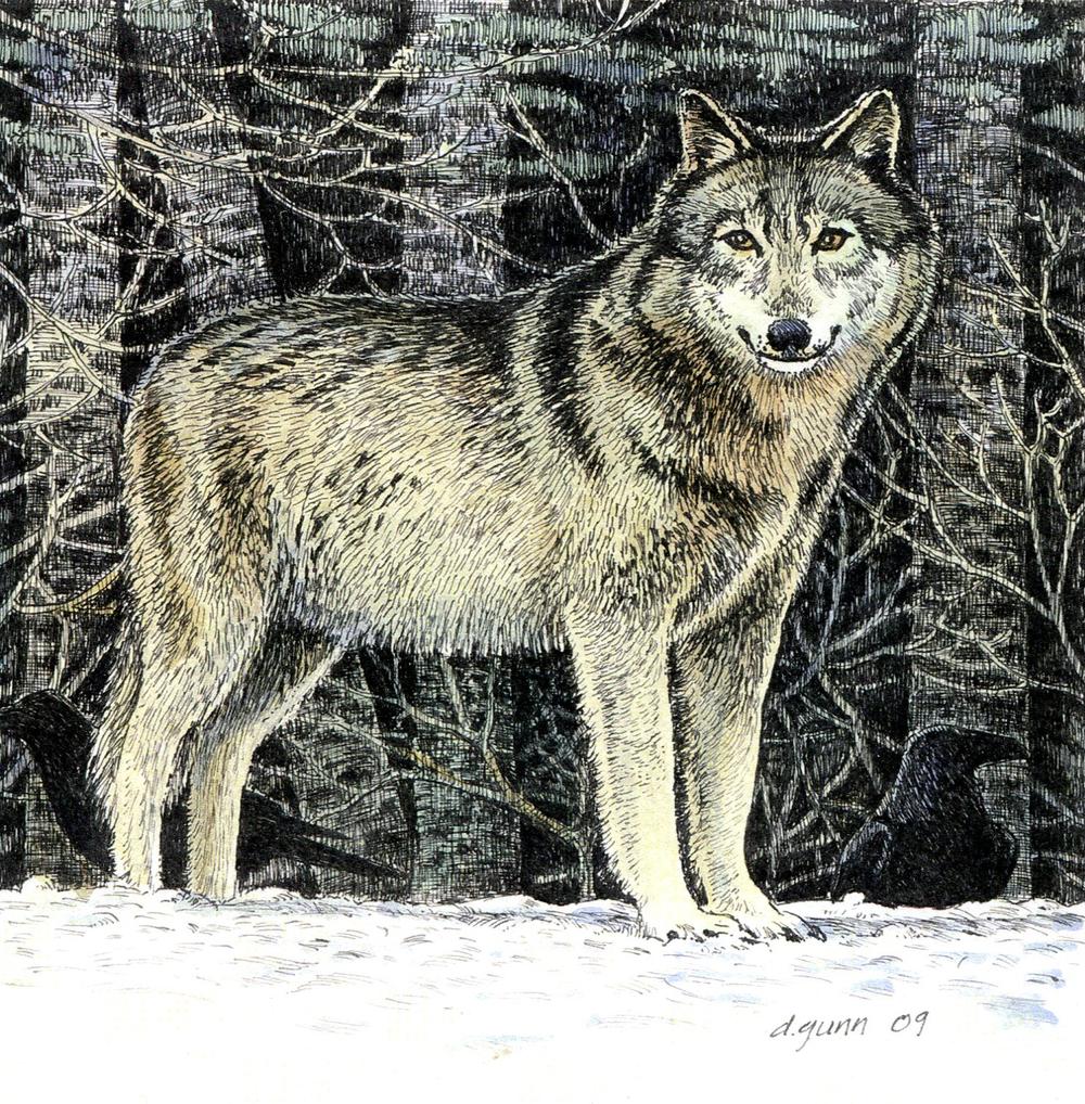 website  wolf241.jpg
