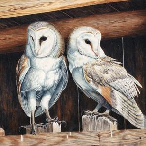 owls-sm-sq.jpg