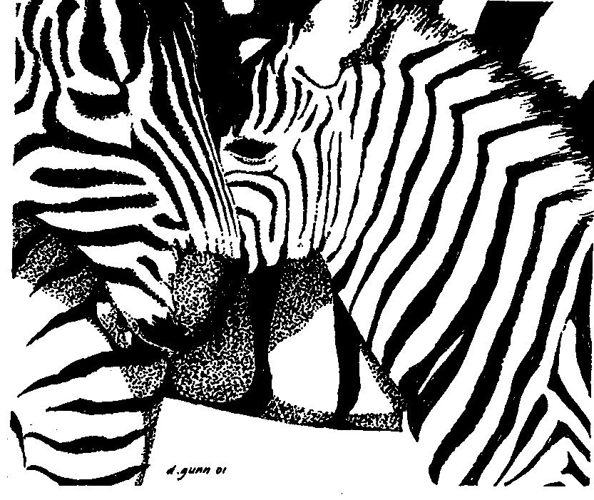 zebras pen and ink300.jpg