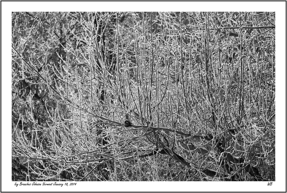 Icy Branches Johnson, Vermont, January 18, 2014 , by Warren Buckles.  All Rights Reserved.  sixscrews.com