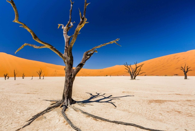 Dead Vlei, by John Gauder. All rights reserved.