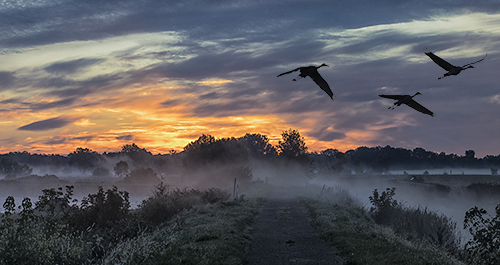 Sandhills at Dawn, by Donald Sylvester. All rights reserved.