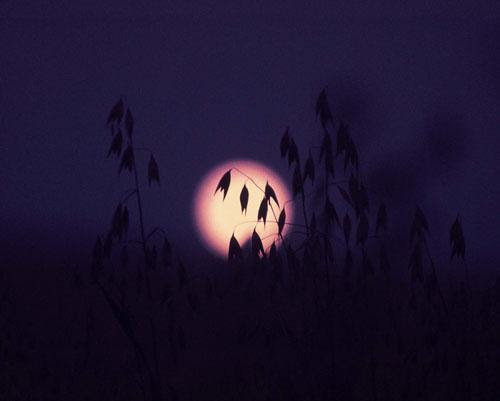 Moonrise and Oatfield    Color film.  Kurt Westbrook, all rights reserved.