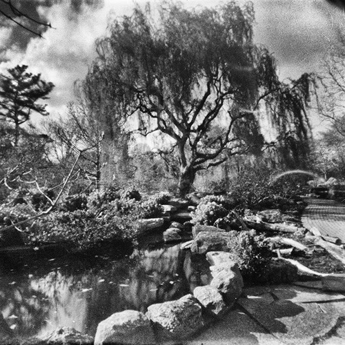 Olbrich Gardens    Holga pinhole  Bob Beaverson, all rights reserved.