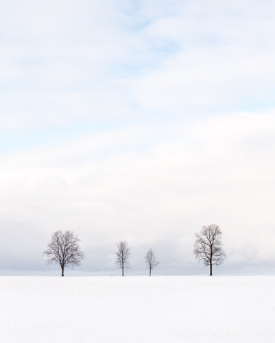 Family of Trees in Nature, by Paul Thoresen. All rights reserved.