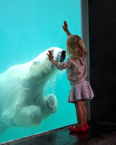 Goldilocks and the Polar Bear, by Diane Hammer. All rights reserved.