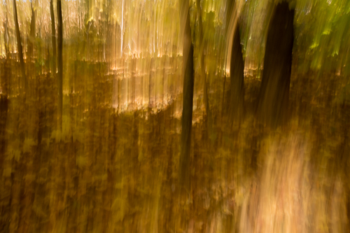 Golden Forest, by Annette Knapstein. All rights reserved.