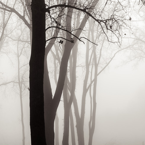 Forest Fog, by Michael Knapstein. All rights reserved.