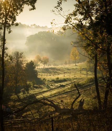 Misty Morning, by Robin Downs. All rights reserved.