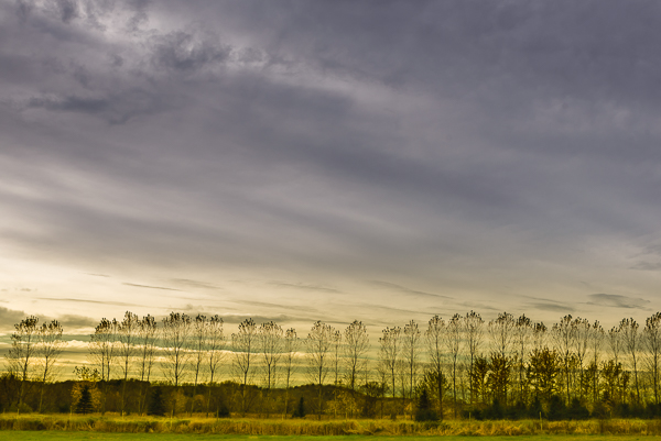 Treeline, by Paul McMahon. All rights reserved.