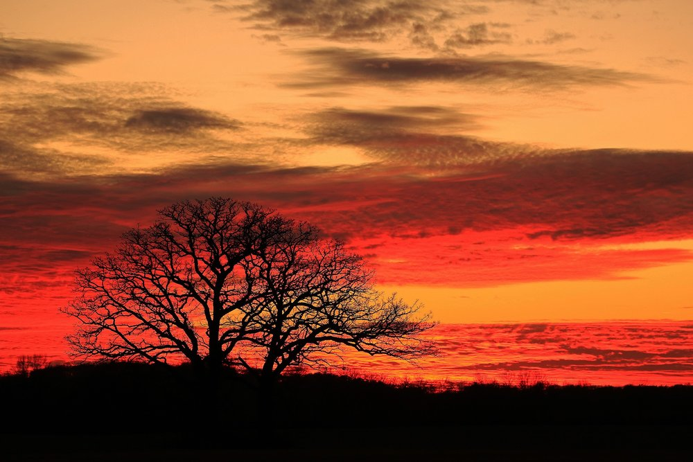 Twin Oaks Sunset by Michael Engelberger. All rights reserved.