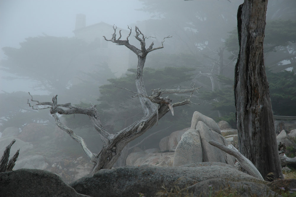 California Coastal Fog, by Gerald Bisgard. All rights reserved.