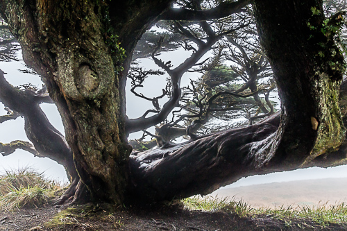 Pacific Coast Giant by David Schoengold. All rights reserved.