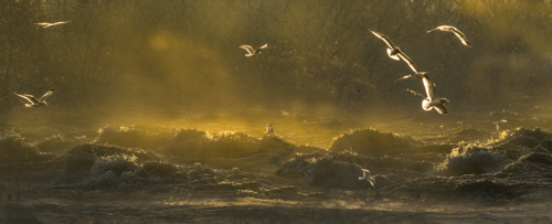 Wisconsin River Flight by Lisa Seidman. All rights reserved.