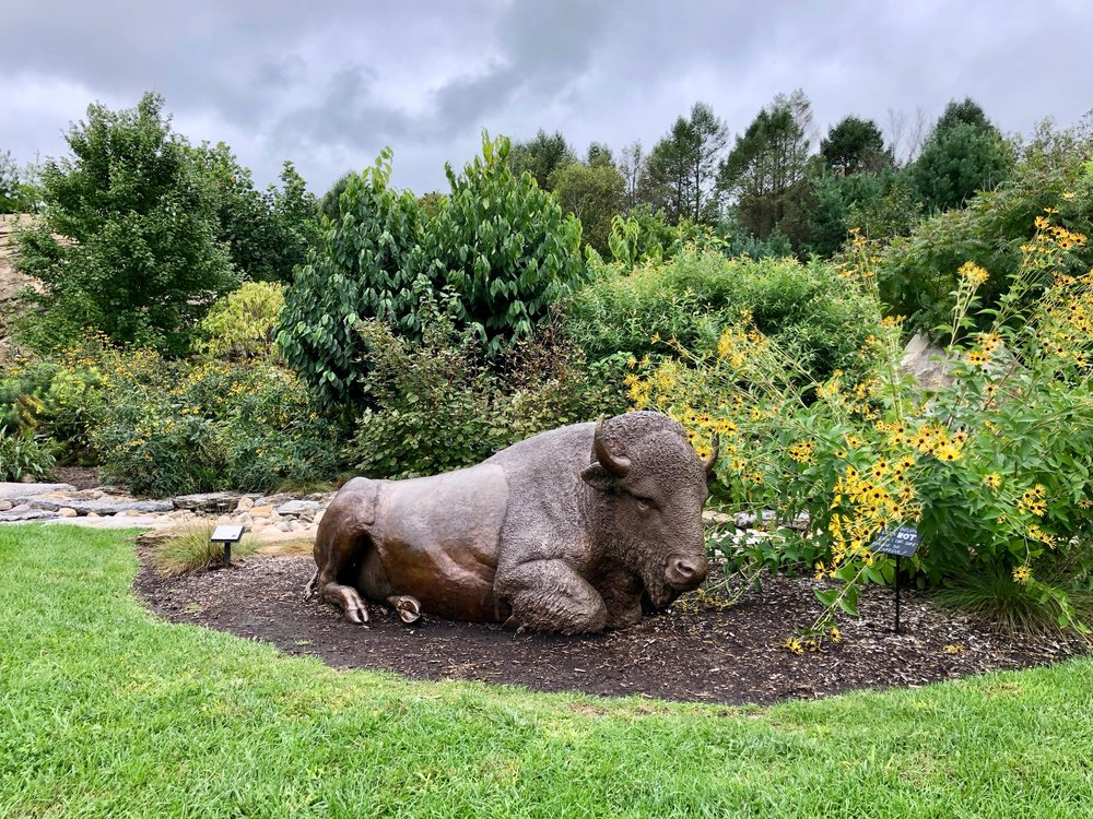 the nittany buffalo at the penn state arboretum