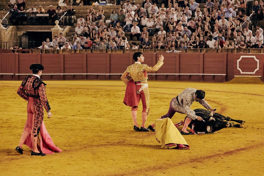 Novilleros   Ist die  Espada  im Herzen platziert, ist der Stier nicht sofort Tod. In seiner Benommenheit wird er an den Rand getrieben und durch abwechselnd rhythmische Bewegungen mit der  Capa  paralysiert. Folgend versetzt der Torero dem Tier den Todesstoß: mit einem zweiten Degen durchtrennt er am Hals das Rückenmark.