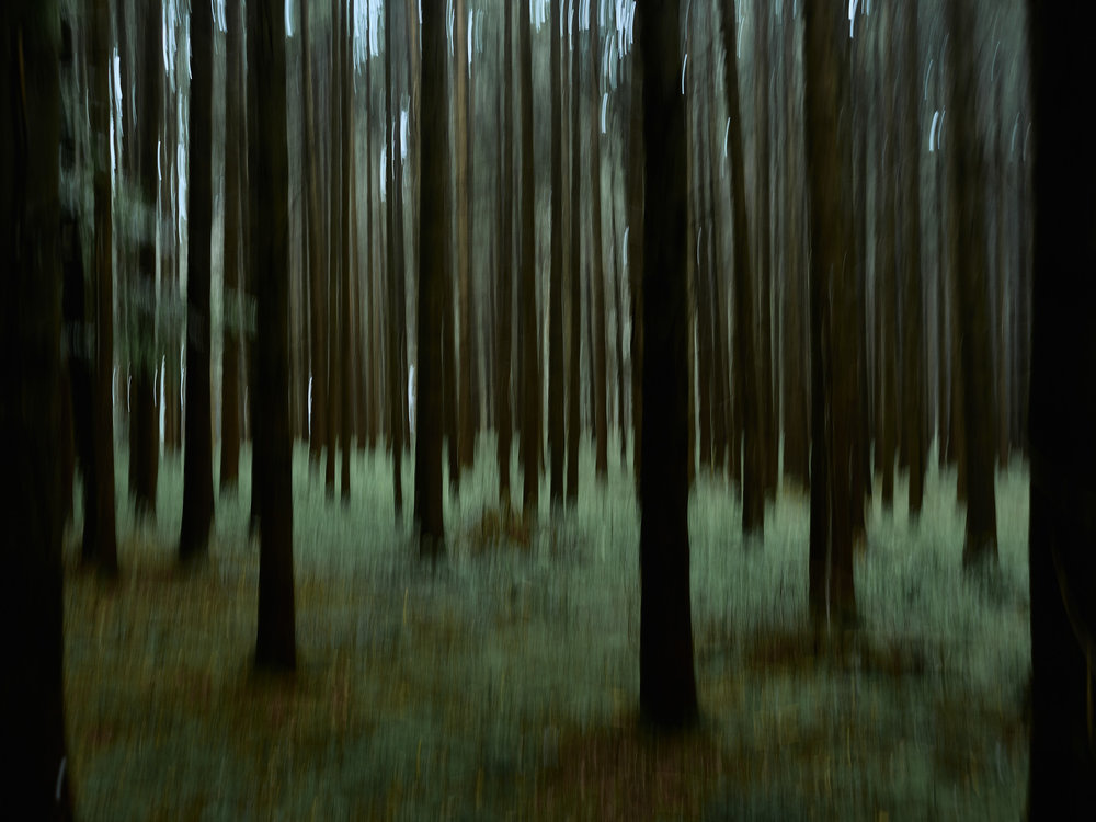 Tod im Paradies   Der Wald, in dem Mehari verschwand. Wahrscheinlich verbrachte er hier die letzten Tage seines Lebens.