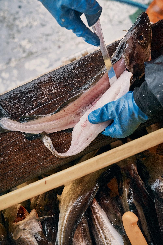 Fish Markets  Kampagne für die  WFG Vorpommern