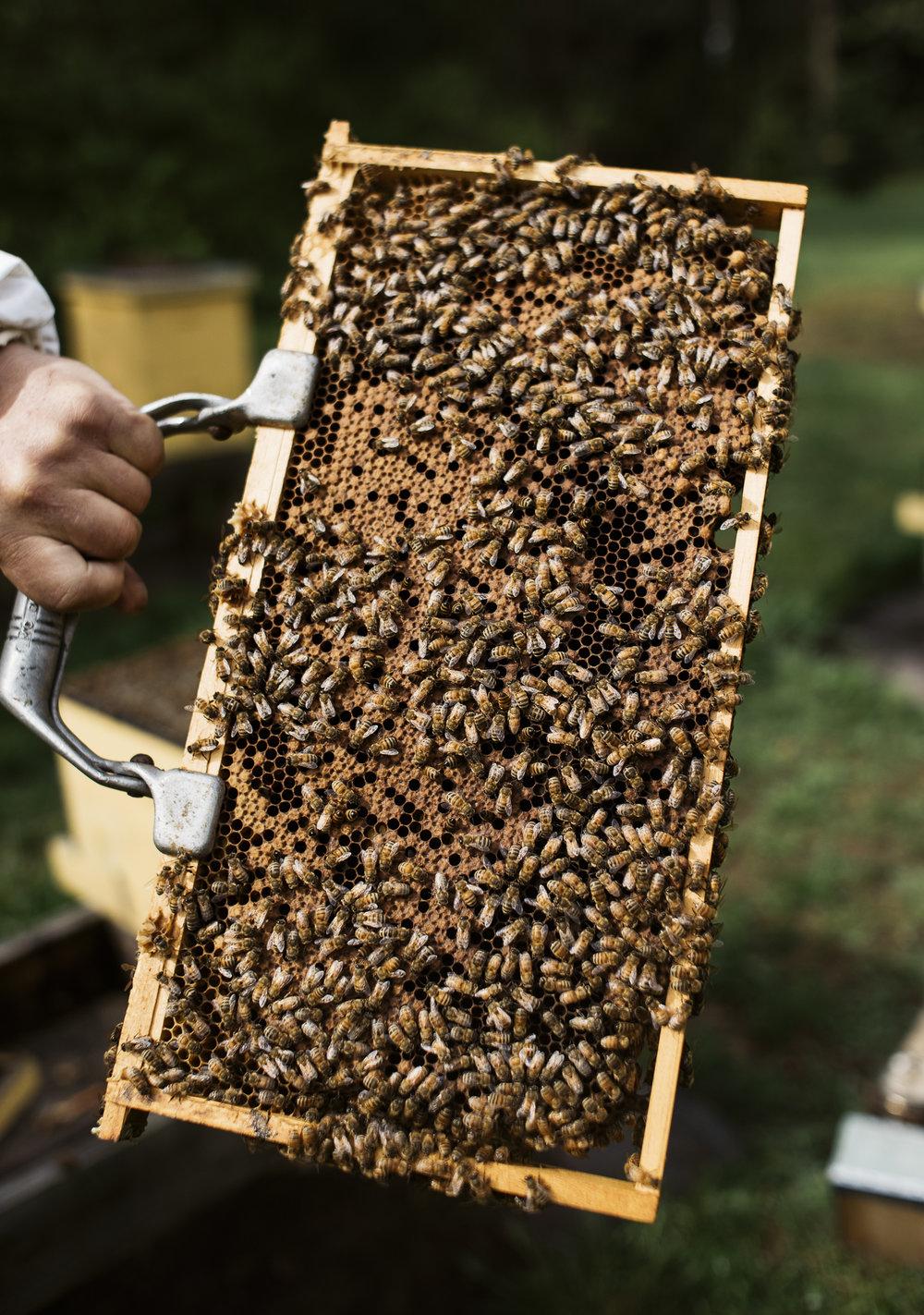 Center for Honeybee Research