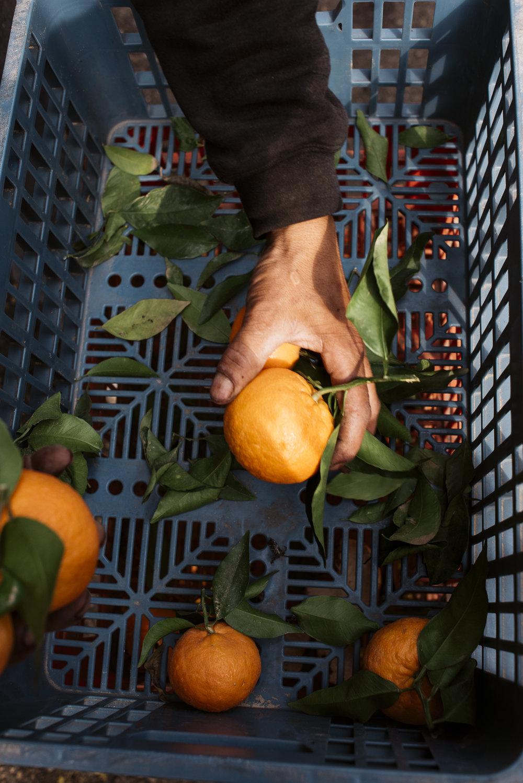 israel jack sorokin middle east photography fine art travel jewish judaism rocks tel aviv carmel market oranges orange hand grabbing basket