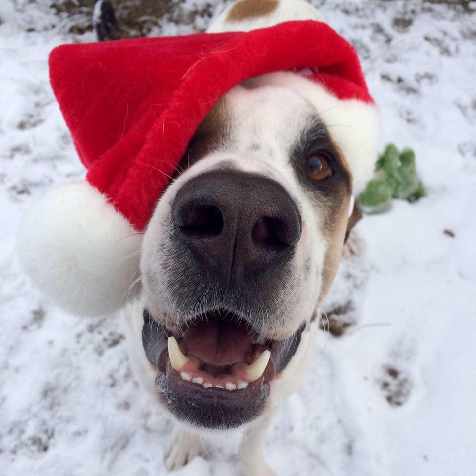 This dog loves you, this Santa hat, snow, Christmas, and has a fairly romantic relationship with the camera, all things told. This is my holiday photo goal.
