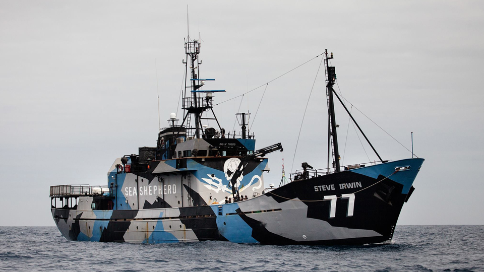 Photo: Sea Shepherd/Eliza Muirhead