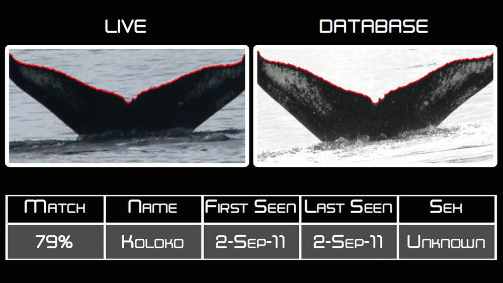 Whale-ID.jpg