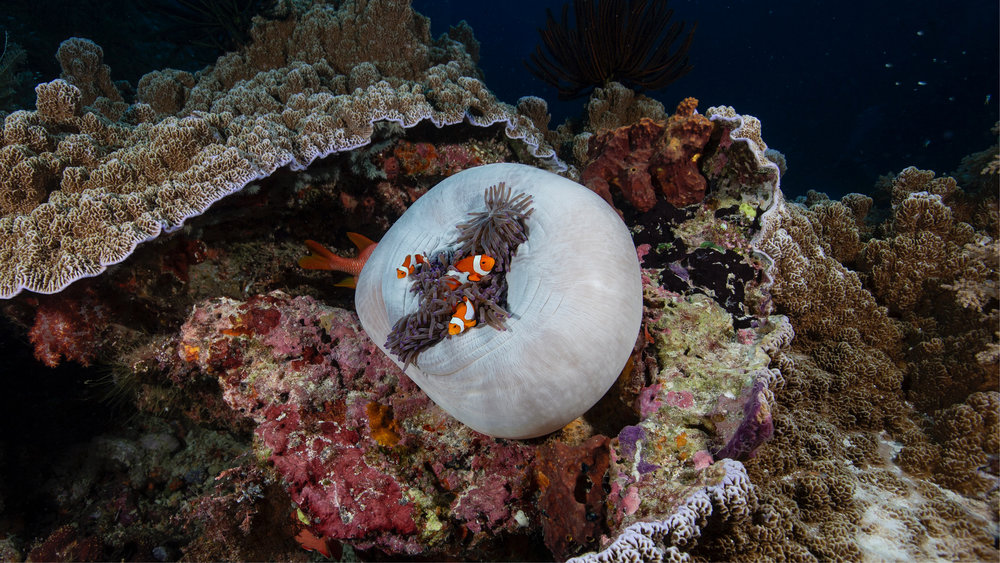 All photography by  Rick Miskiv  – Director of Underwater Photography for The Hydrous.