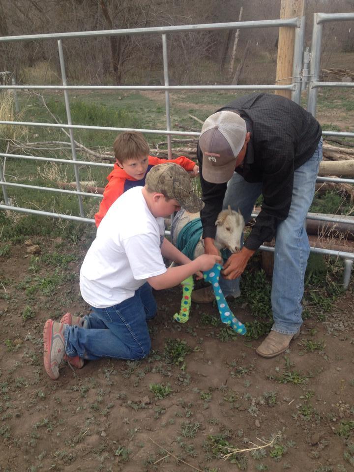goatdressing3.jpg