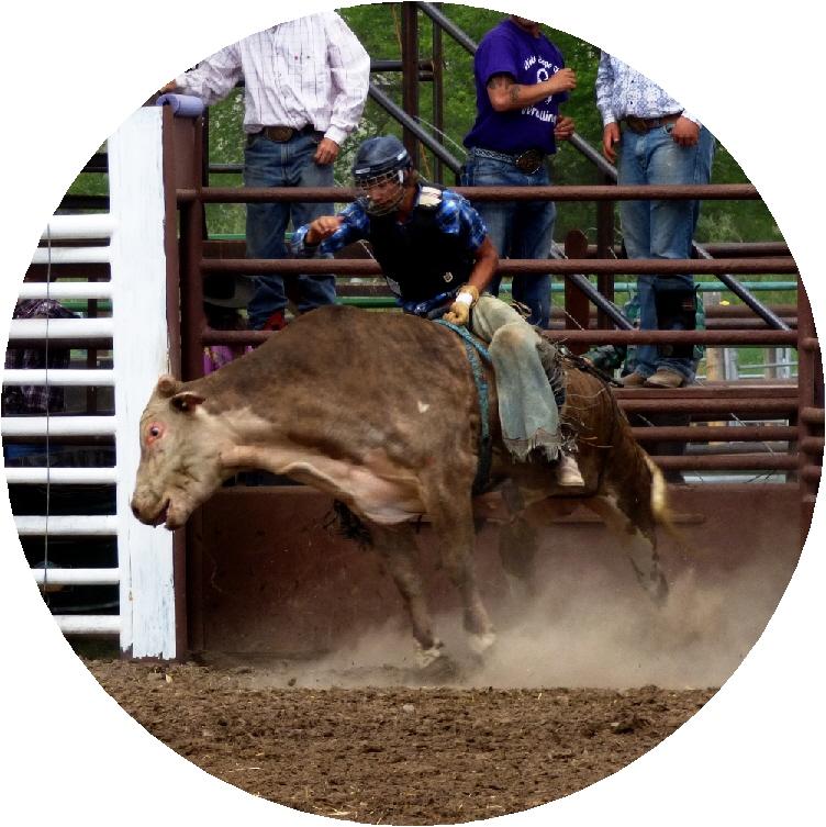 bull6.jpg