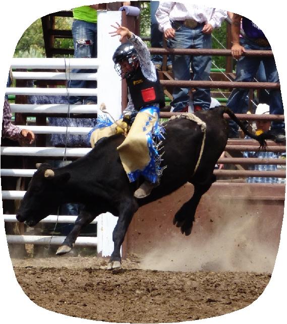 bull7.jpg