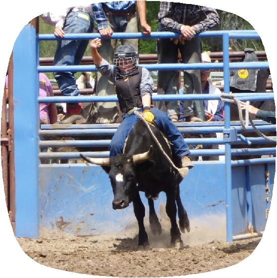 bull1.jpg