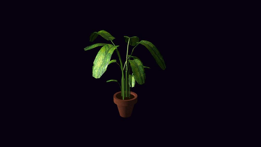 potted-plant_Main.1.jpg