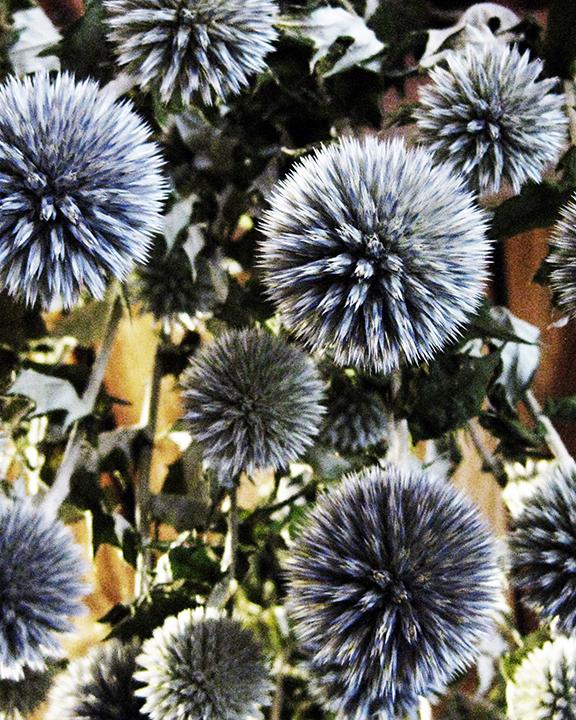purple stars.jpg