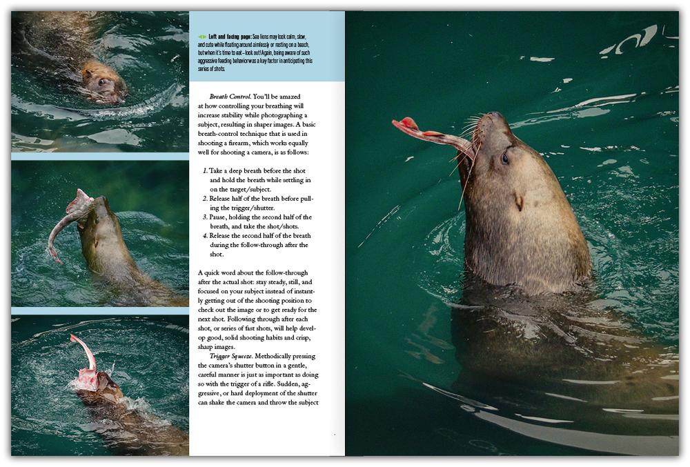 book_classen_wildlife3.jpg