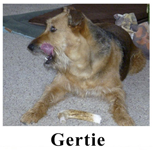 Gertie.jpg