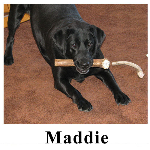 Maddie.jpg