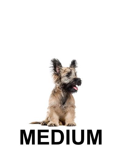 medium-dog4.jpg