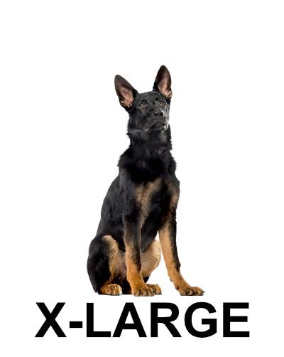 x-large-dog4.jpg
