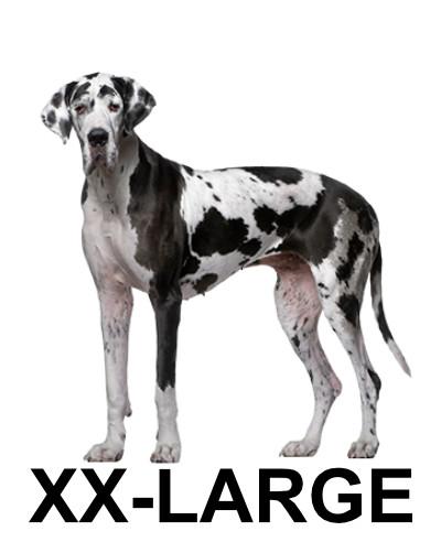 xx-large-dog4.jpg