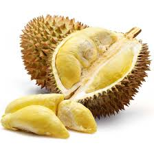 httpeffectualchange.comwp-contentuploads201502durian---wikipedia-the-free-encyclopedia-fpkhcbhw.jpg.jpg