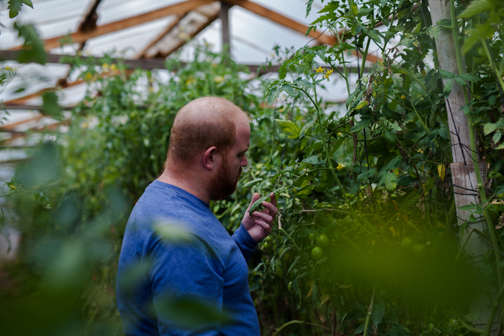 Jesse, exploring the greenhouse from which he sources the Tacorazon tomatoes.
