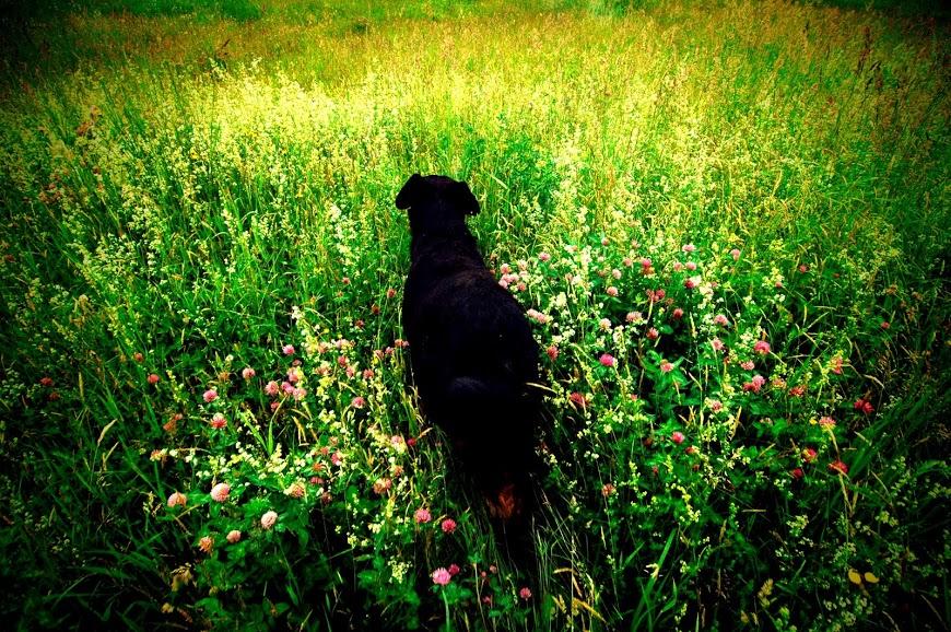 dog paddock.jpg