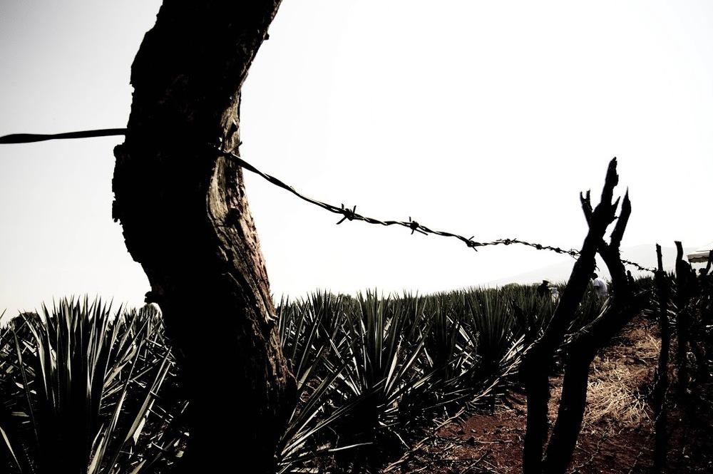 fiona dickson design photography blog media australia2.jpg