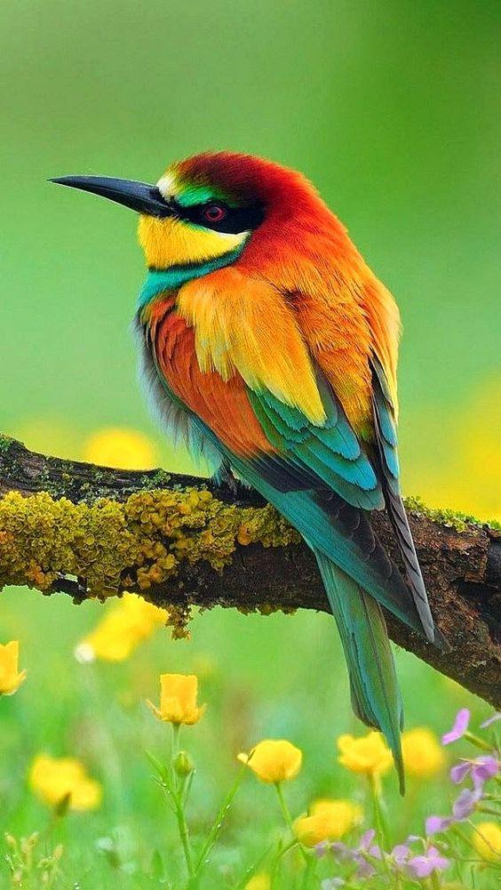 fiona dickson blog birds art 12.jpg