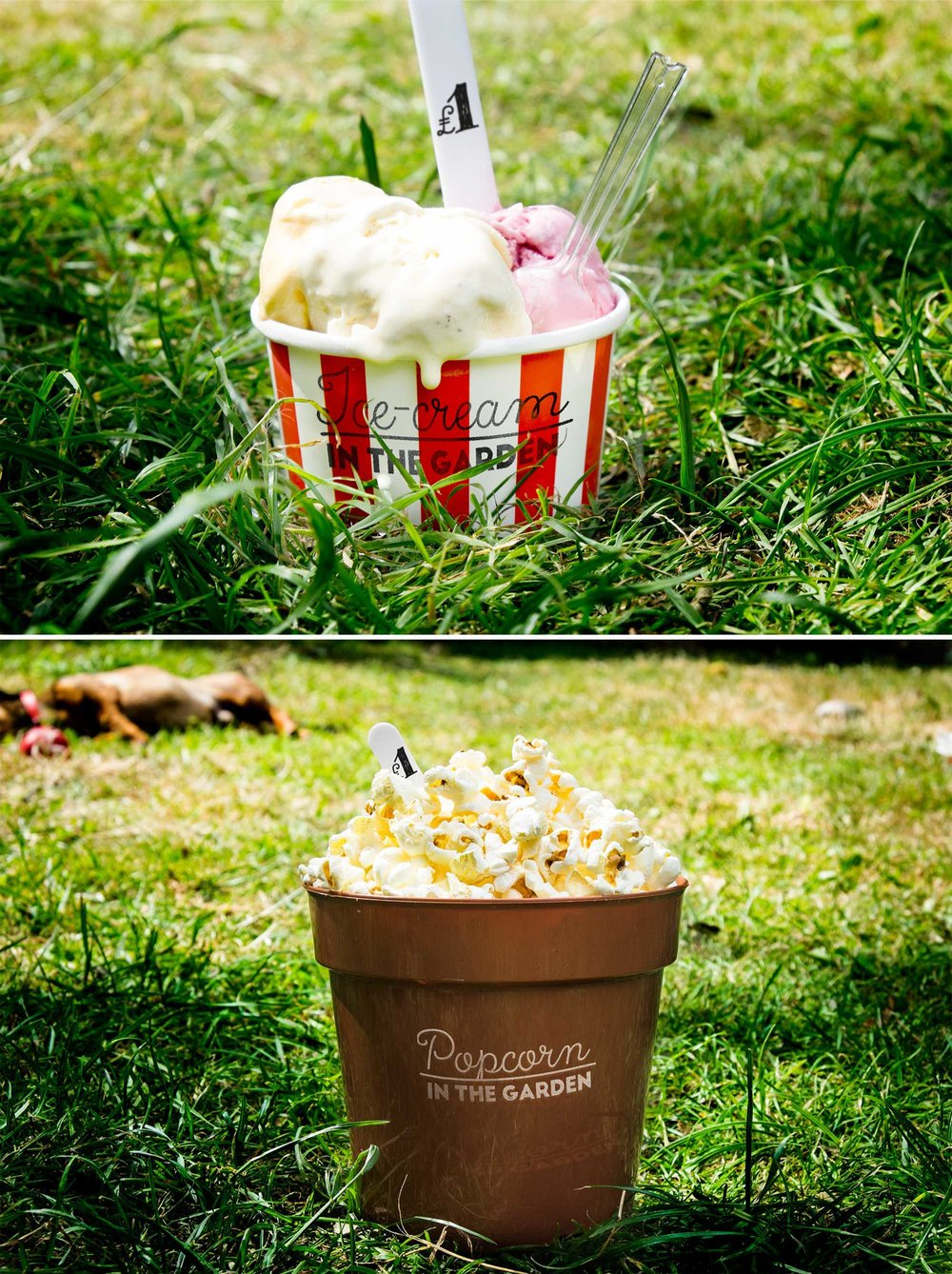 "Branding design for ""___ in the Garden"" a series of intimate, charitable, open-air movie nights!"