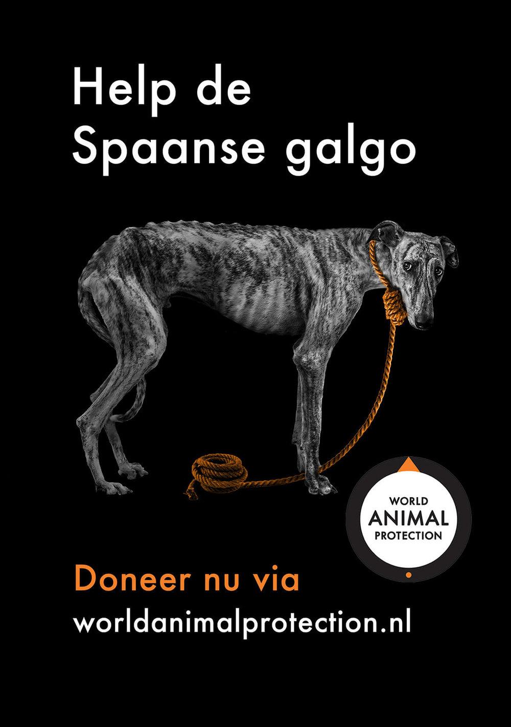Poster Galgo.jpg