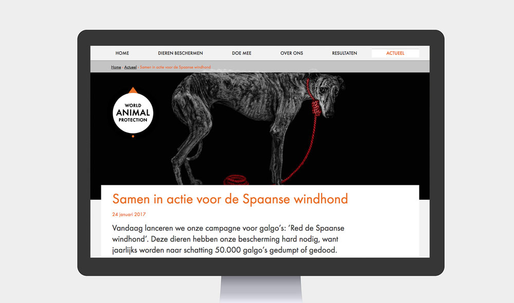 Artikel website galgo.jpg