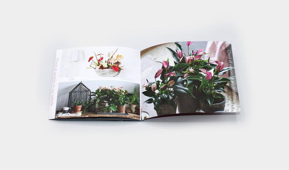 Anthurium_Brochure_2.jpg