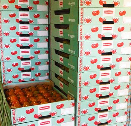 Muur van tomaten